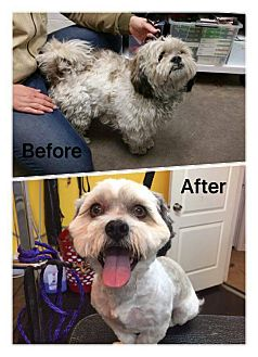 Lhasa Apso Mix Dog for adoption in West Valley, Utah - CAPTAIN