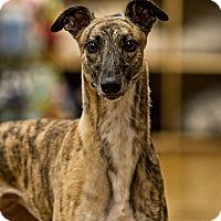 Adopt A Pet :: Lady - Aurora, IN
