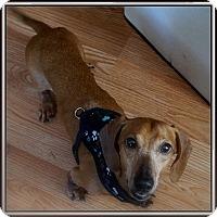 Adopt A Pet :: Lincoln - Toronto, ON
