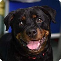 Adopt A Pet :: Prada - Hillsboro, NH