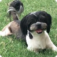 Adopt A Pet :: Zingy - Houston, TX