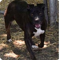 American Pit Bull Terrier Mix Dog for adoption in Saginaw, Michigan - Jenna