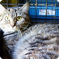 Adopt A Pet :: Mary - Marlinton, WV