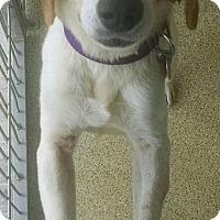 Adopt A Pet :: WILLOW - Gloucester, VA