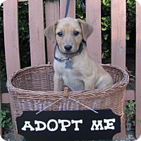 Adopt A Pet :: Melissa - Mountain Home, AR