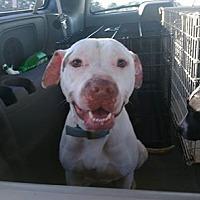 Adopt A Pet :: Chico - Covington, TN