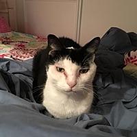 Adopt A Pet :: Panda - Herndon, VA