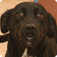 Adopt A Pet :: Sparrow - McDonough, GA