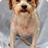 Terrier (Unknown Type, Small) Mix Dog for adoption in Midland, Texas - Dynamite