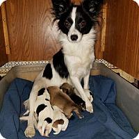 Adopt A Pet :: Neena - N. Babylon, NY