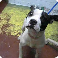 Adopt A Pet :: SNOOPY - Atlanta, GA