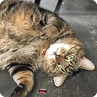 Adopt A Pet :: Charlie - Lowell, MA
