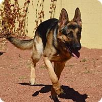 Adopt A Pet :: Chewy - Payson, AZ