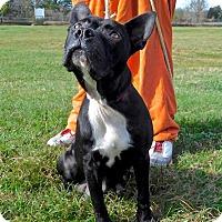 Adopt A Pet :: Rachel - St. Francisville, LA