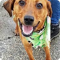 Adopt A Pet :: Santa - Lapeer, MI