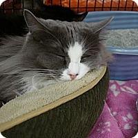 Adopt A Pet :: Persia - Monrovia, CA