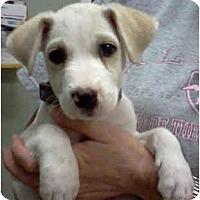 Adopt A Pet :: NELLIE - Phoenix, AZ