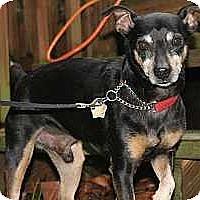Adopt A Pet :: Chester - Malaga, NJ