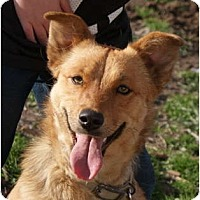 Adopt A Pet :: Aspen - Glenpool, OK