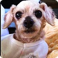 Adopt A Pet :: Judi Christina - Sherman Oaks, CA
