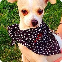 Adopt A Pet :: Scrappy - Green Bay, WI
