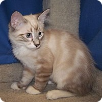 Adopt A Pet :: K-Carla1-Karla - Colorado Springs, CO