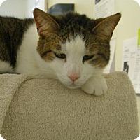 Adopt A Pet :: Lea -NY - Windsor, CT