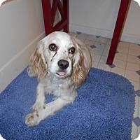 Adopt A Pet :: Jenny -Adopted! - Kannapolis, NC