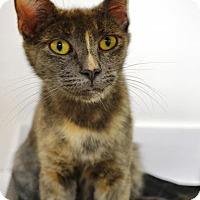 Adopt A Pet :: Gigi - East Smithfield, PA