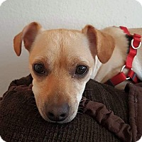 Adopt A Pet :: Jordy formerly Winky - Las Vegas, NV