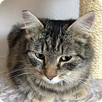 Adopt A Pet :: Shelly - San Ramon, CA