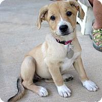 Adopt A Pet :: Emmy Lou - Bedford, VA