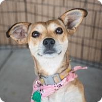 Adopt A Pet :: Natalie $125 - Seneca, SC