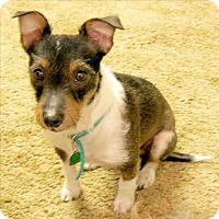 Adopt A Pet :: Spice (LA) - Baton Rouge, LA