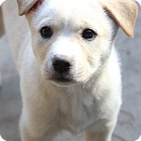 Adopt A Pet :: Lia - Woonsocket, RI