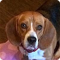 Adopt A Pet :: Bert - Houston, TX
