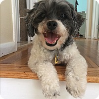Adopt A Pet :: Bentley - Long Beach, NY
