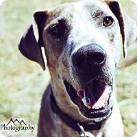 Adopt A Pet :: Mcguire - Denver, CO
