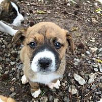 Adopt A Pet :: Zella - Hohenwald, TN