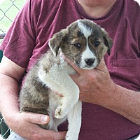 Adopt A Pet :: Buttons - Hohenwald, TN