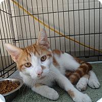 Adopt A Pet :: Preston - Elyria, OH
