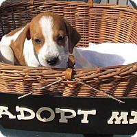 Adopt A Pet :: Nellie - Oakland, AR