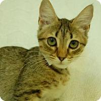 Adopt A Pet :: Sunset - Bradenton, FL
