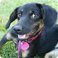 Adopt A Pet :: Myrtel - Bernardston, MA