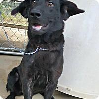 Adopt A Pet :: Hannah - Kimberton, PA