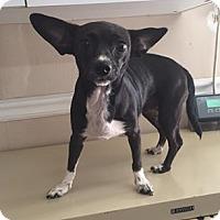 Adopt A Pet :: 5680 - Calhoun, GA