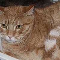 Adopt A Pet :: McNeil - New Bern, NC