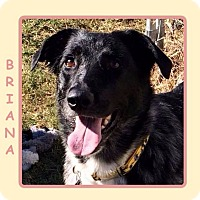 Adopt A Pet :: BRIANA - Dallas, NC