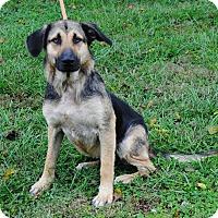 Adopt A Pet :: Gretchen - Parsons, KS