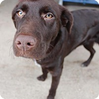 Adopt A Pet :: Adelaide *Special Needs* D160737: PENDING ADOPTION - Edina, MN